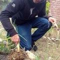 Joan-Muñoz-cuidant-hort_article_gestio-canvi_creixement_El-despertador-3